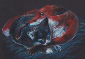 The fox and the feline by redwattlebird