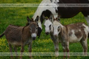 Donkey Deliberation by FicktionPhotography