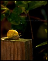 Snail Post II by HereticalNotionShots