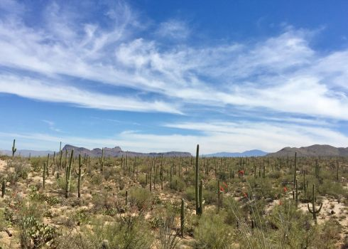 Saguaro Land by vacuumslayer