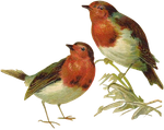 VICTORIAN birds 1_quaddles by quaddles