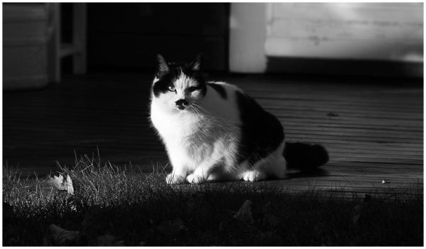 BW-Edition: Cat Next Door by Mimado