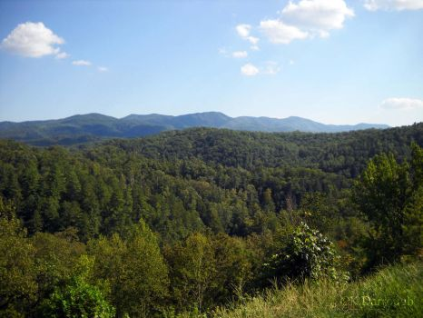 Cherokee National Forest by Dair-to-be-me