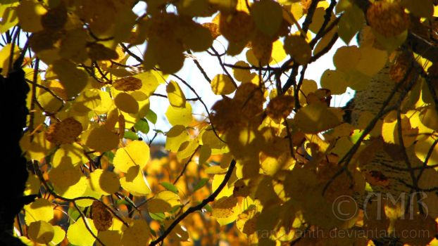 Autumn Leaves 1 by Ranakanth