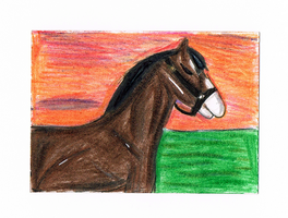 Unnamed Clydesdale ACEO by AmazingGlideh