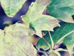 Budding to be Autumn by Chynna-B