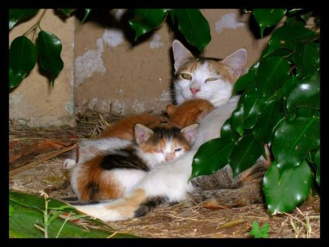 Cypriot Litter by fuzzy