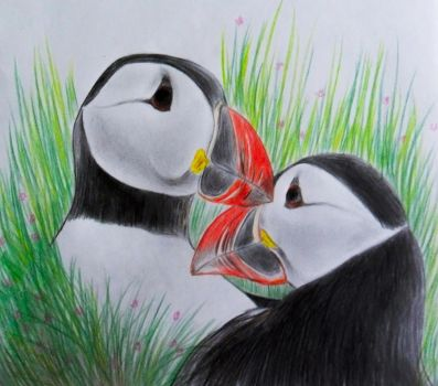 Puffins' Love by SunnyMel
