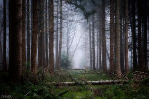 Abandoned Forest Trail by tvurk