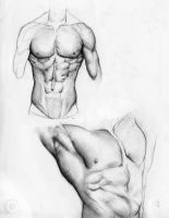 Male Torso by itokyoshoes