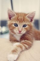 mr ginger tom. by phycotic-hypnotic