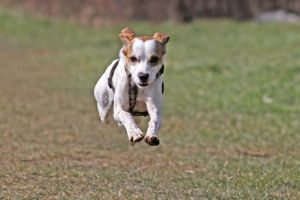 Jumping Dog by xLeane