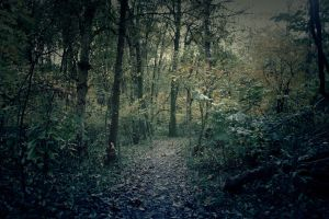 Forest III by AssassinM-Stock