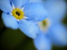Forget-Me-Nots 9 by zaphotonista