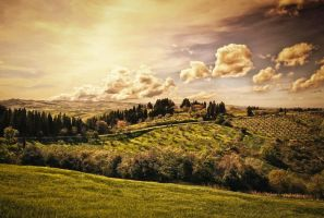 .The Hill. by cichutko