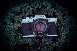 Camera in cabbage by NRichey