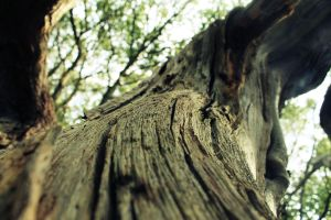 Tree close up by Jhickling