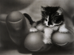 Speed Drawing Smallest Cat by 8DFineArt