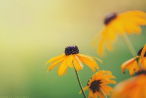 summer colors by CliffWFotografie