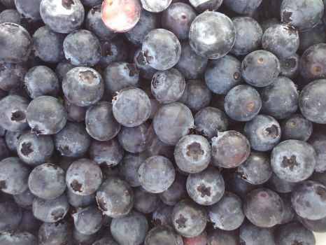 Blueberry's Galore! by caymanian15