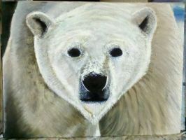 Polar Bear Closeup by KaptainMyke