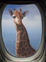 Very Tall Giraffe by Loulou13
