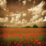 An old summer in poppyland by LadyCarnal