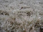 Frozen Grass by Cego-Colher