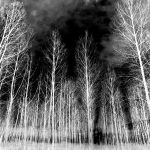 The Witching Wood by Dave-Ellis