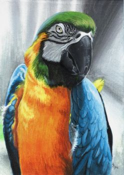 Parrot by ZliDe
