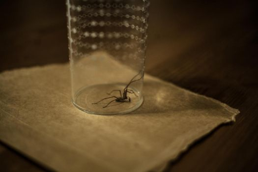 The spiders in the other room by Joolin