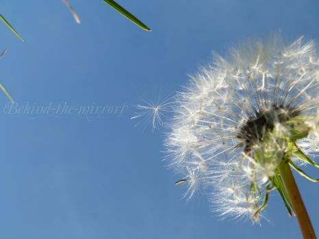 Dandelion - up in the sky by behind-the-mirrors