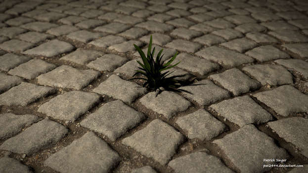 Lonely plant by pat2494
