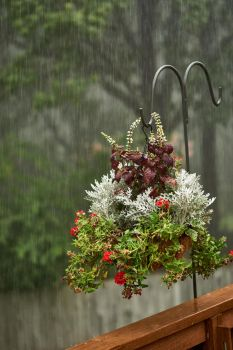 Rainy day flower basket by G240Photography